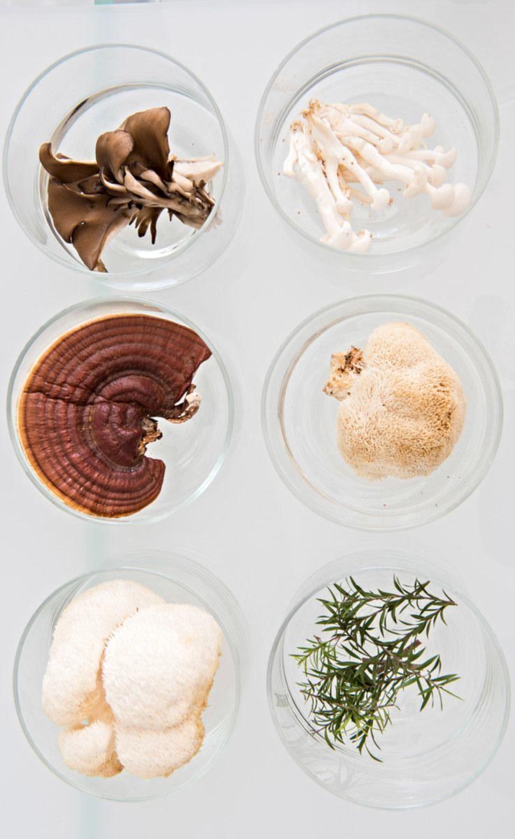 Brzi vodič za adaptogene gljive